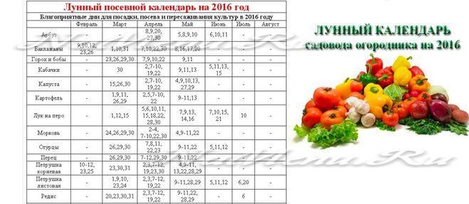 Лунный календарь для перца болгарского