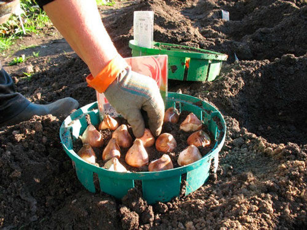 Домашняя гидропоника выращивание огурцов 34