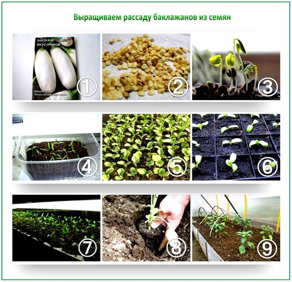 Можно ли сажать перец из своих семян 495