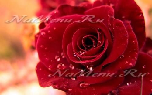 красивые розы в вазе