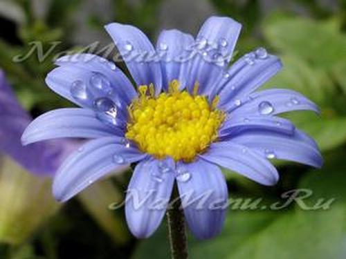 Что добавить в воду для цветов
