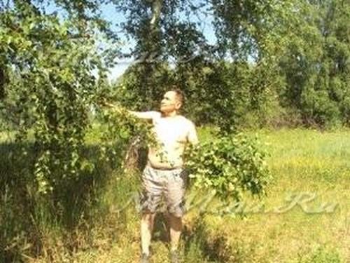 Когда заготавливать березовые веники
