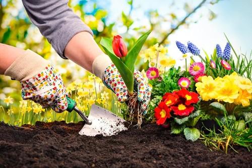 Нельзя сажать цветы дома 385