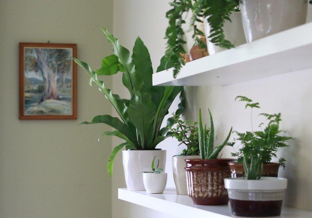 пензе комнатные растения которые любят тень фото тому, кто заставил