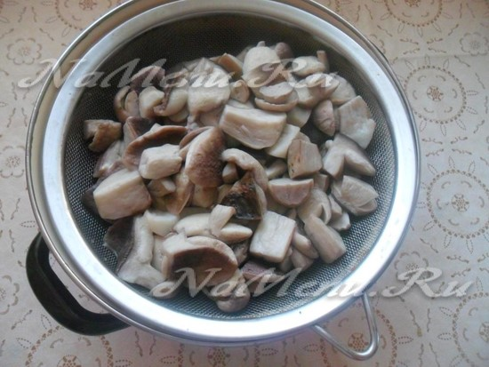 Кипетим грибы