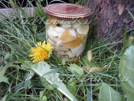 Рецепт грибы белые маринованные на зиму
