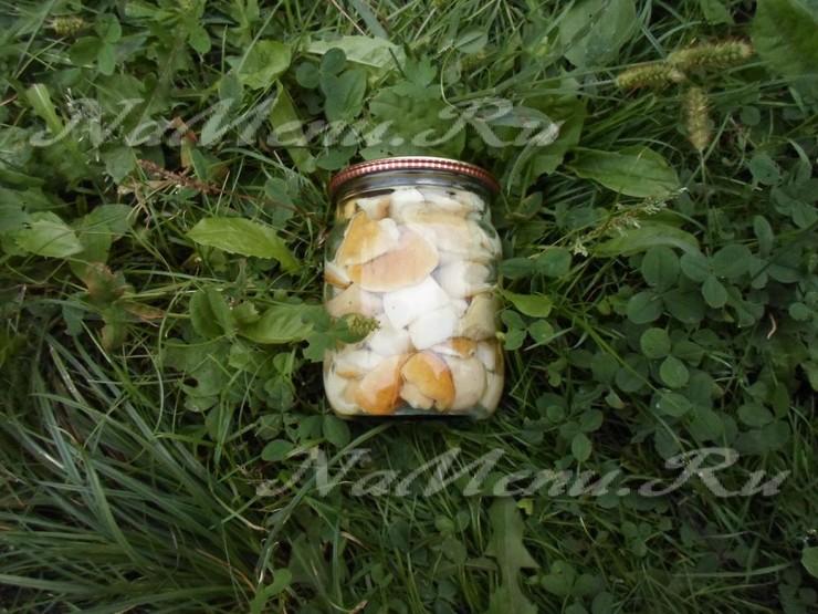 Грибы белые, маринованные на зиму