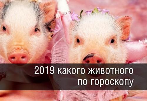 2019 год какого животного по гороскопу: в чём встречать и что готовить