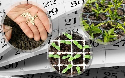 """Посевной календарь на март 2019 года садовода и огородника"""""""