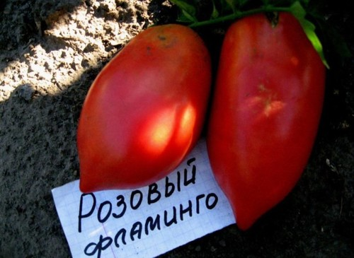 """Лучшие сорта томатов на 2019 год для теплиц в Подмосковье"""""""
